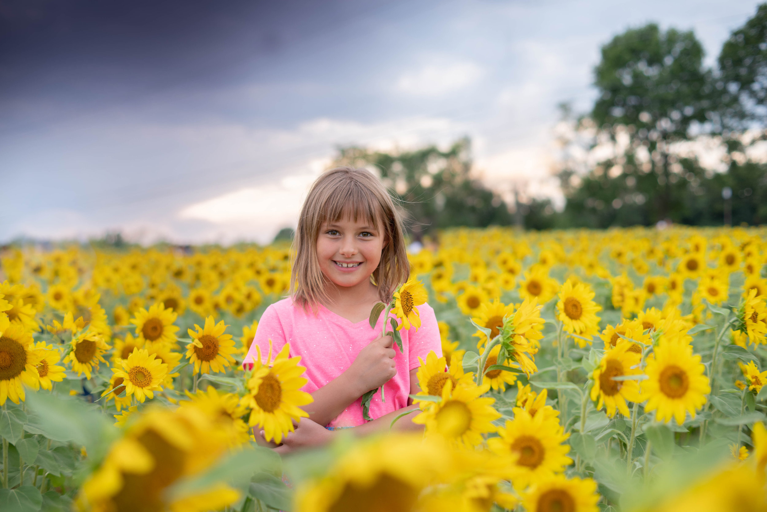 sunflowers-8.jpg