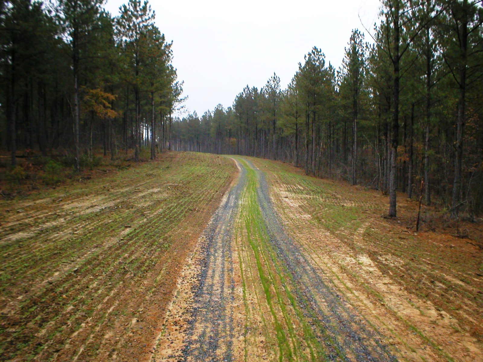 Clear Cut Road