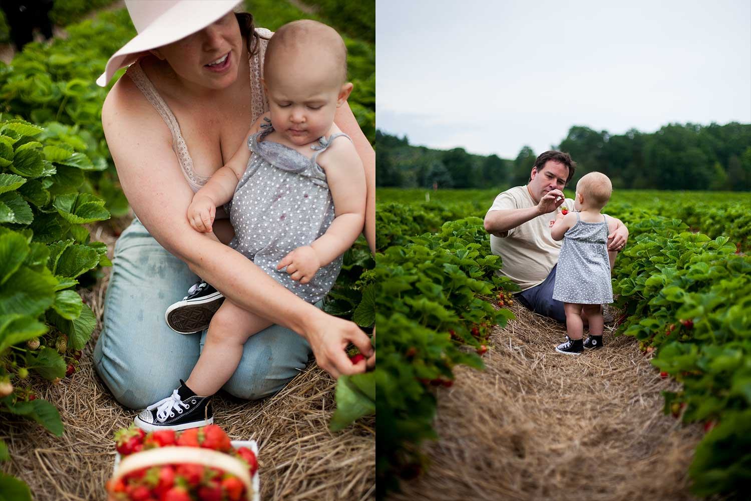 strawberry-picking-connecticut.jpg
