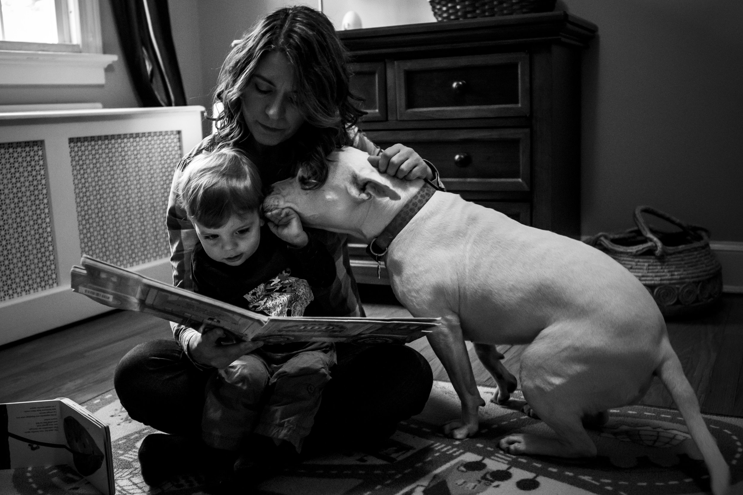 authentic family portrait in black and white with dog, pit bull, in CT.