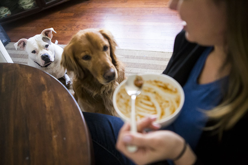 Documentary family photography of two dogs watching mom finisher her soup.
