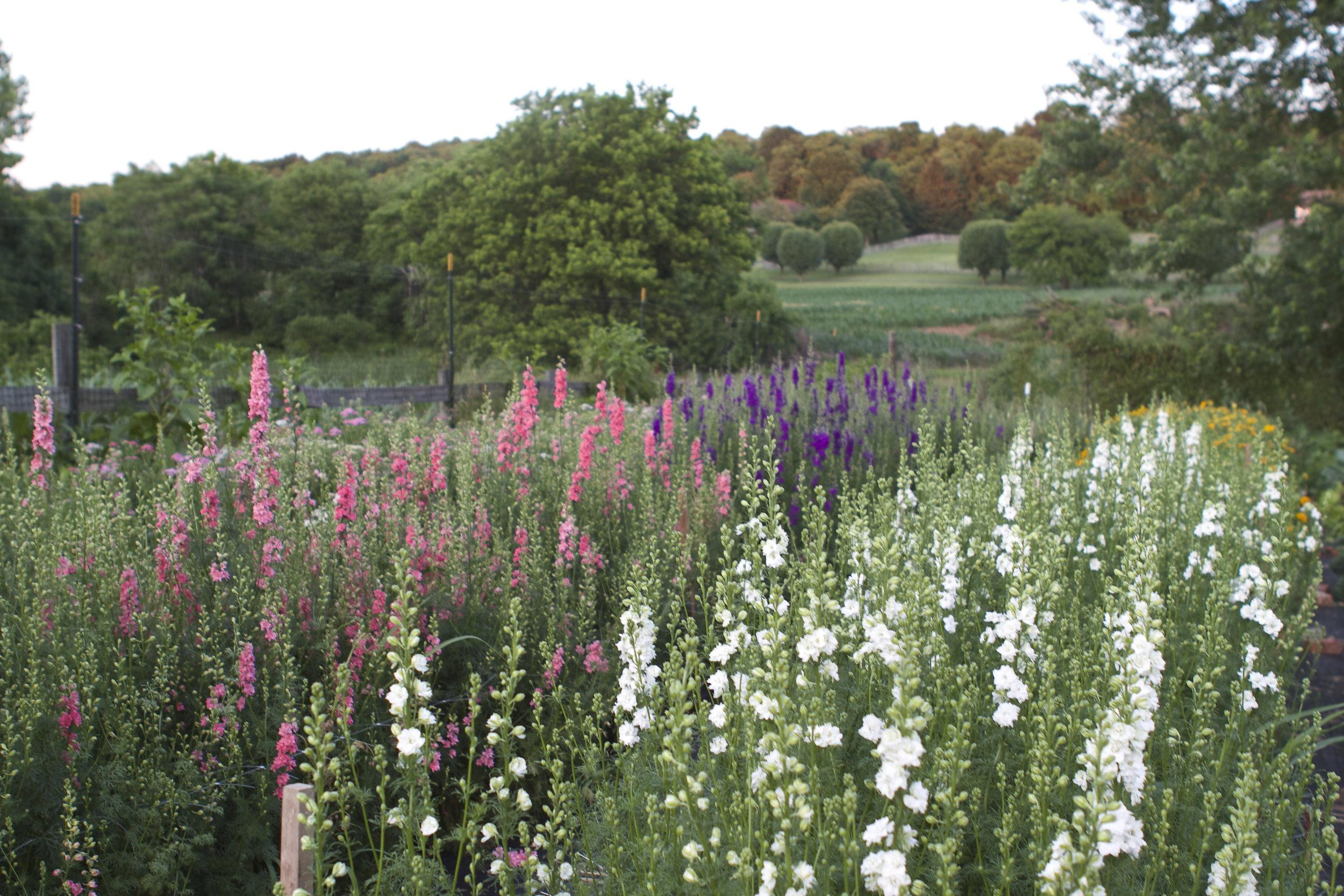 Belle Blooms Farm.jpg