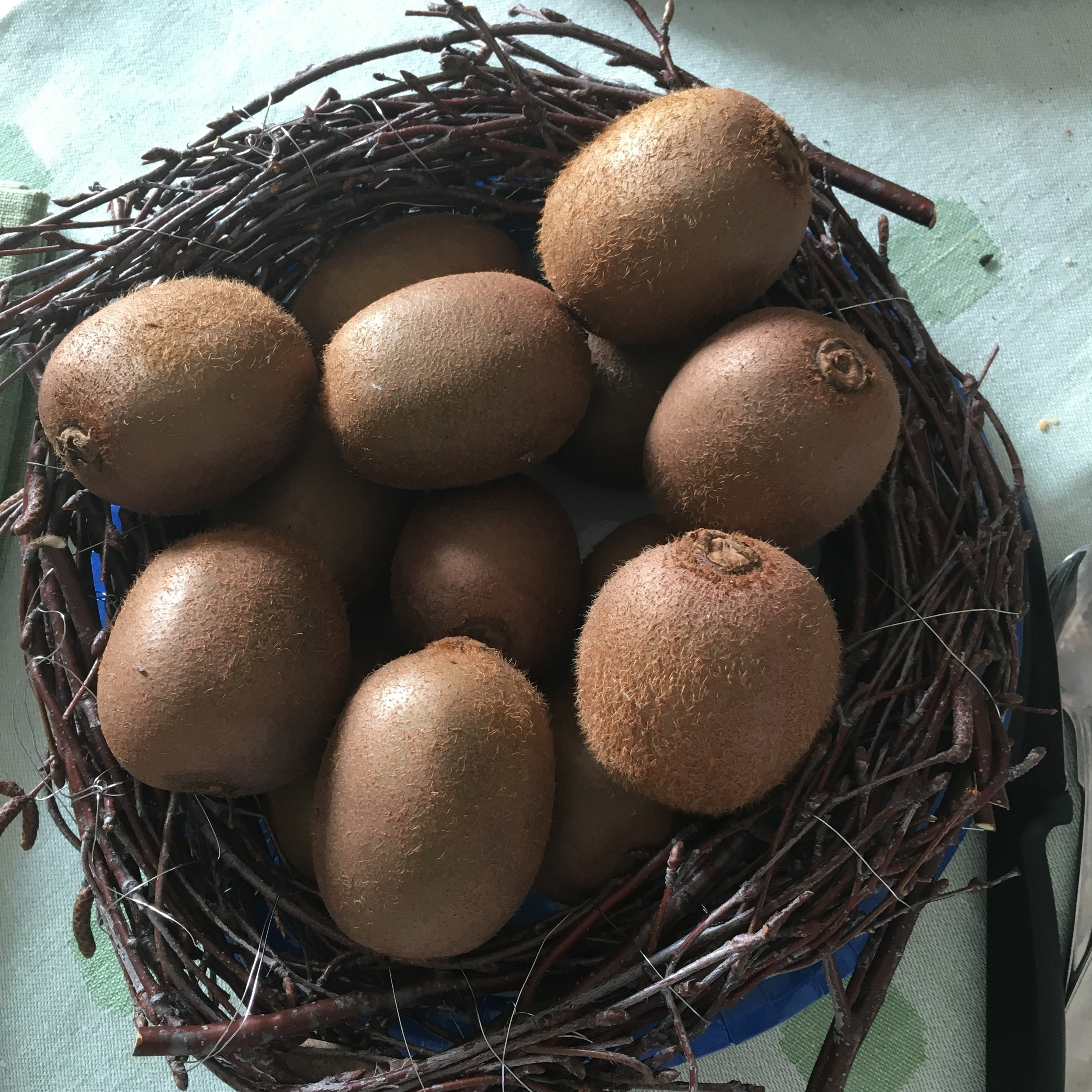 My creative mum did a kiwi bird nest