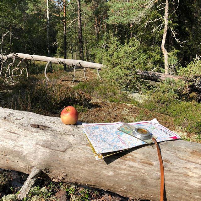 Autumn started great - with a long forest bath! Lovely! #hittauttävling2019 #hittaut2019 #shinrinyoku #skogsbad #forestbath #lunsenskogen #orientering #vandring #varjedagettäventyr