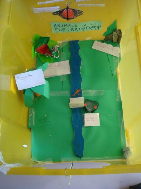 Sadie's model of the rainforest