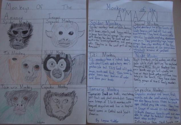Logan's monkeys of the rainforest