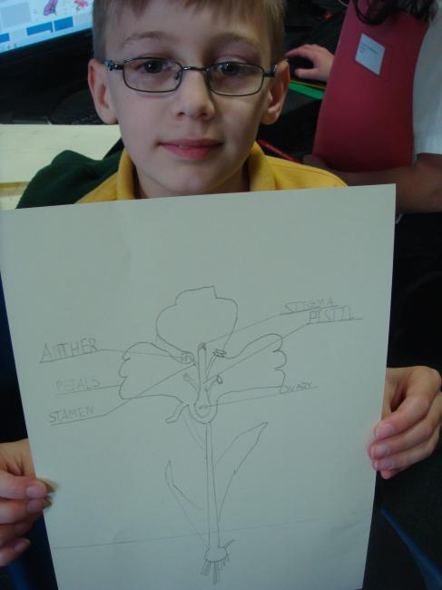 Next we drew a diagram of the plant and labelled each part. We worked together to find out the role or function of each of the different parts. Some are quite tricky! Did you know a plant has a male and female part? Can you find them on the diagram or dissections?