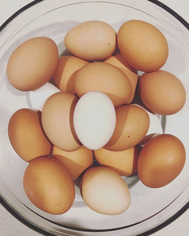 Our new chickens have been so good to us! They're giving us half a dozen+ eggs a day and we are running out of room! If you're interested in purchasing fresh eggs from happy, healthy chickens we sell them for $2 a dozen 🥚🥚🥚🐓