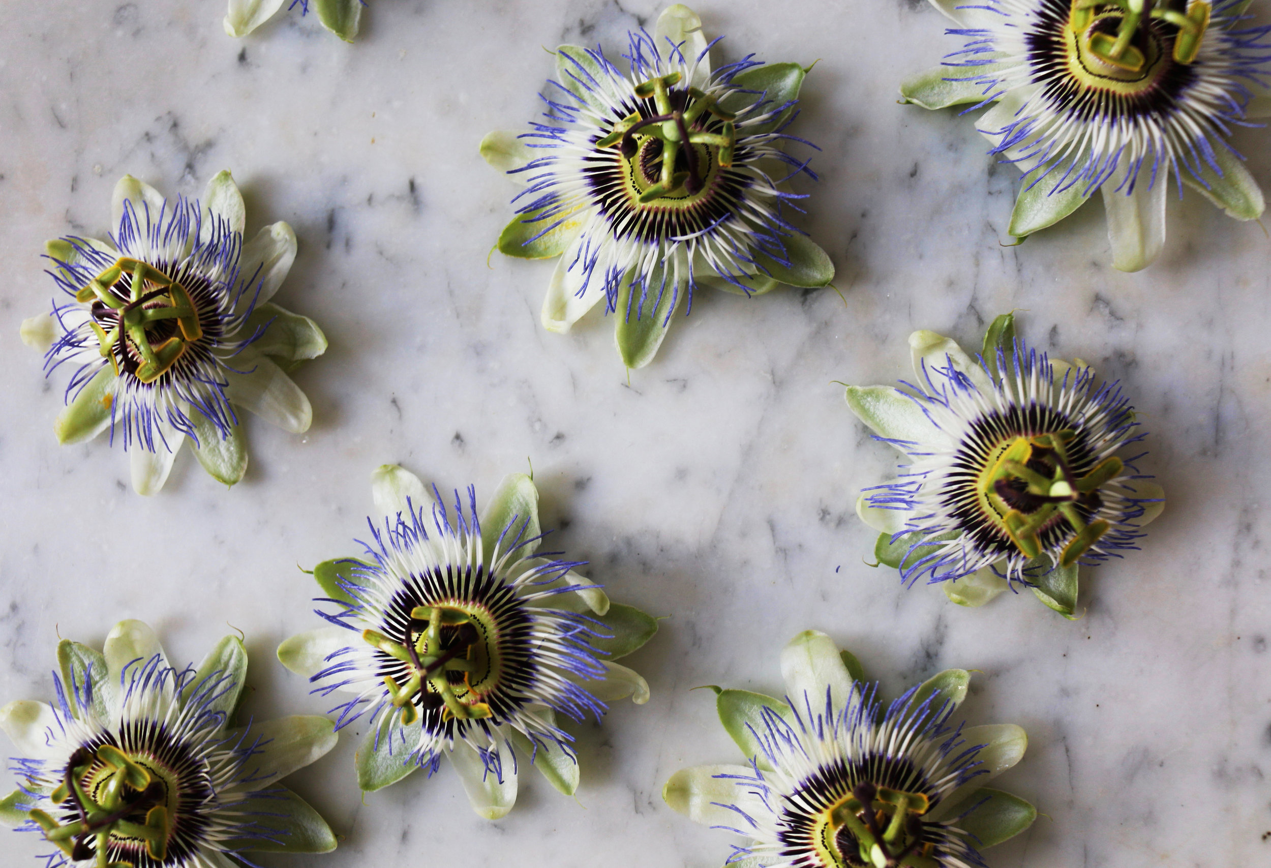 Calming and anti anxiety benefits passionflower-culinarywitch