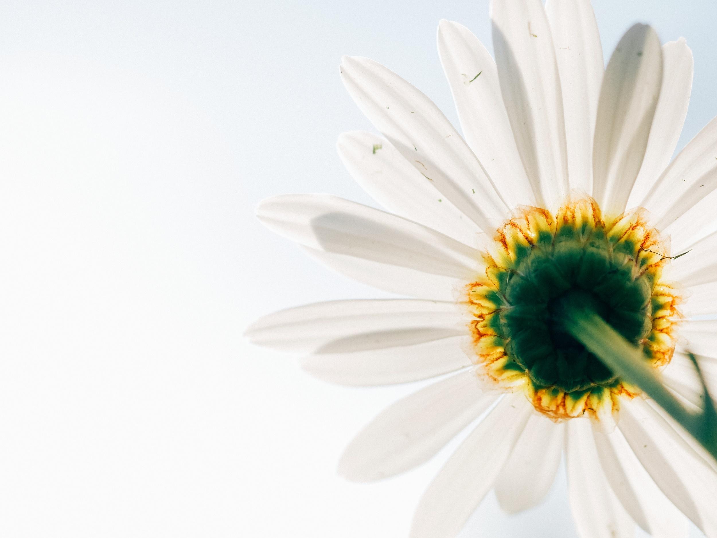 unsp.flowerunder.jpg