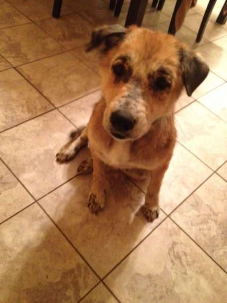 """""""Sandy"""" the cute stray mistakenly killed by San Antonio Animal Care Services"""