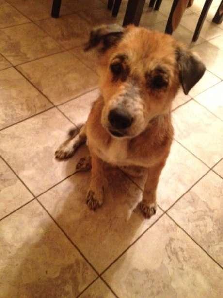 """Sandy"" was mistakenly killed by San Antonio Animal Control"