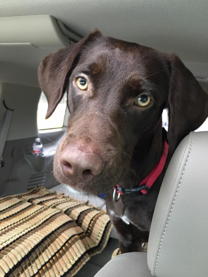 This dog was saved from a high kill shelter because someone offered to foster him for a rescue