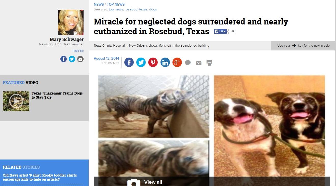 rose and bud headline .jpg