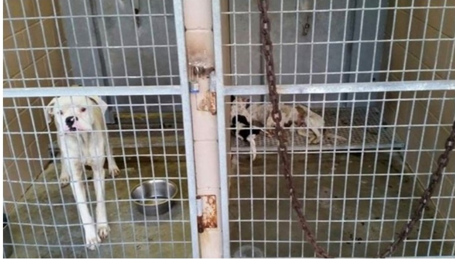 Picture taken at Kenedy Animal Shelter, dead dogs are in the kennel on the right.