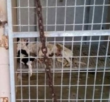 Dead dogs found in a kennel at Kenedy, TX Animal Control