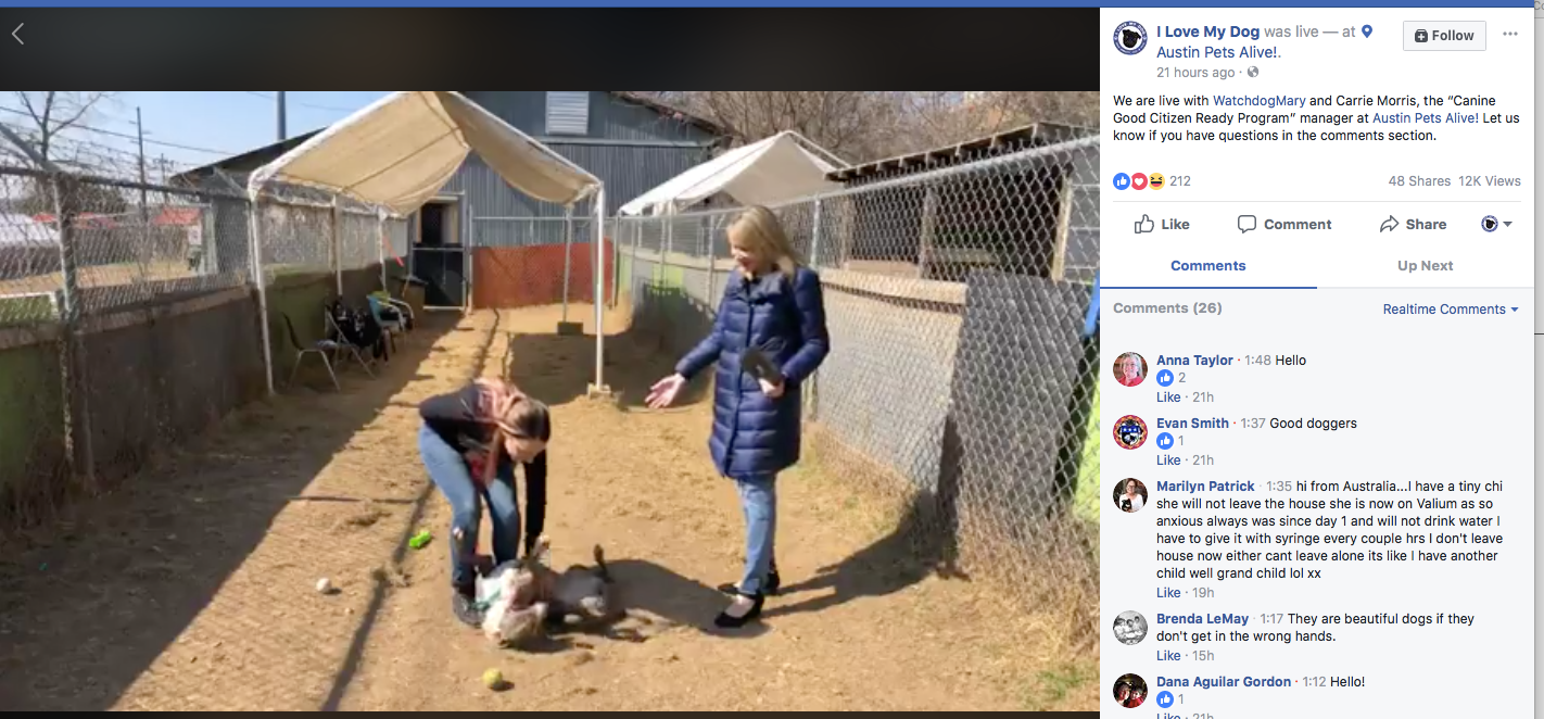 Live with Austin Pets Alive, featuring their Canine Good Citizen pit bull training program.