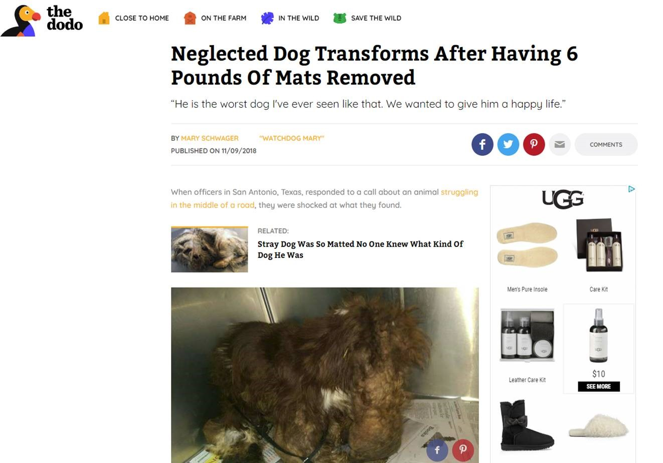 Animal control officers could not even tell the dog's gender