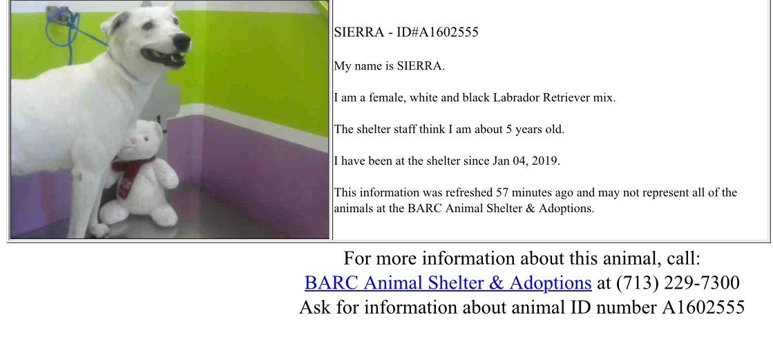 BARC Animal Shelter, Houston, Texas