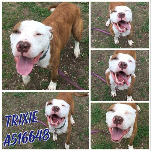 Trixie, San Antonio Animal Care Services