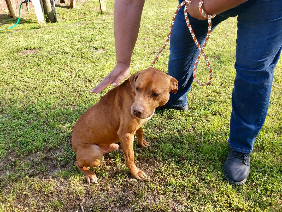 Dog at shelter currently in need of an adopter or rescue group