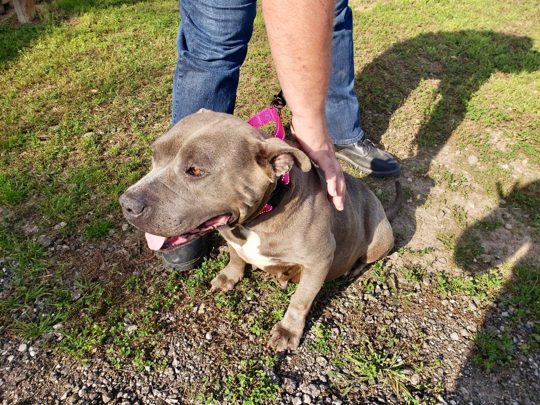 Dog currently at the shelter in need of an adopter or rescue group