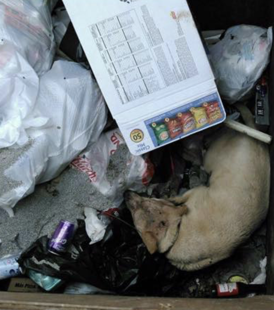 Original photo of Millie found in a dumpster taken by San Antonio Animal Care Services