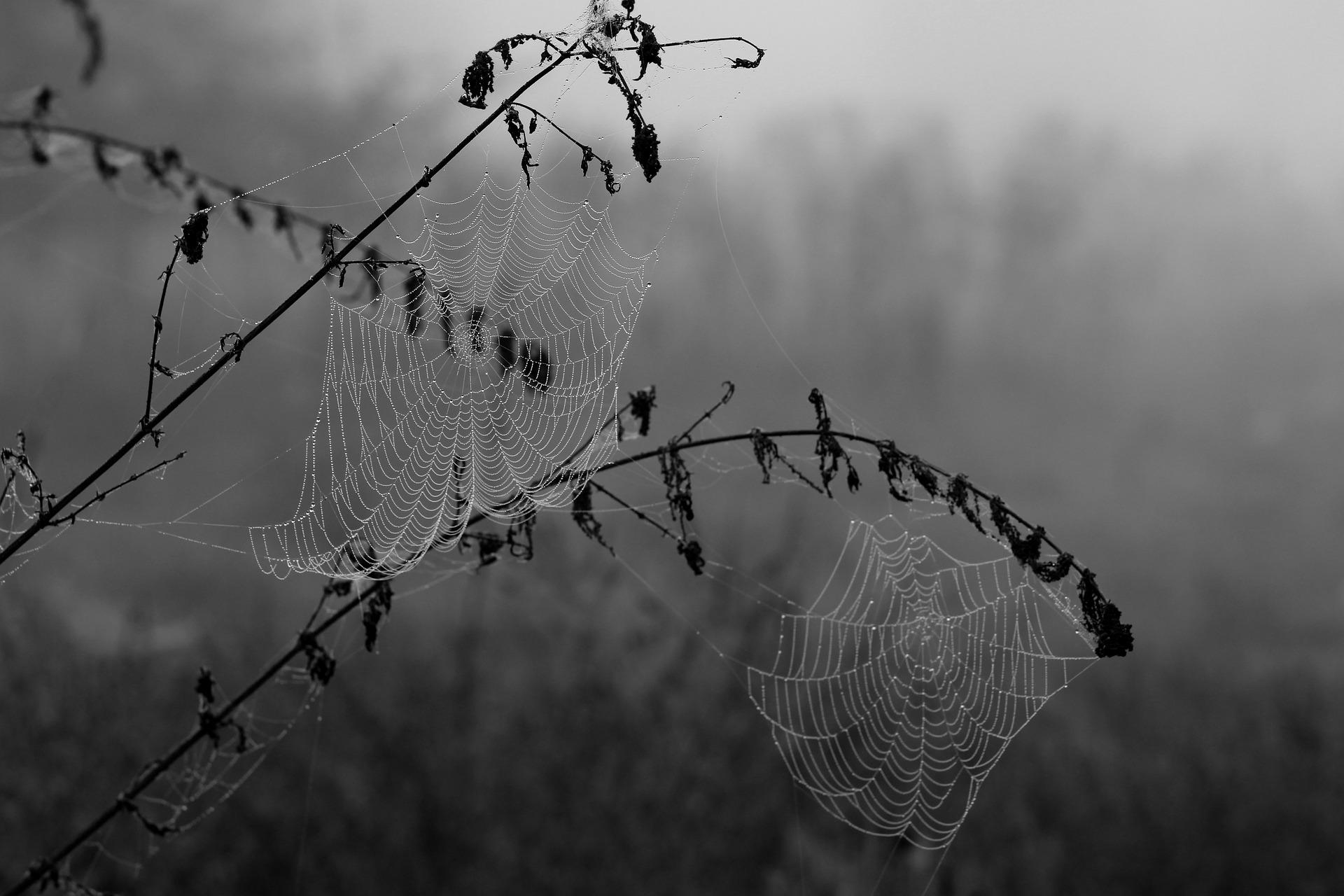 spider-web-1729194_1920.jpg