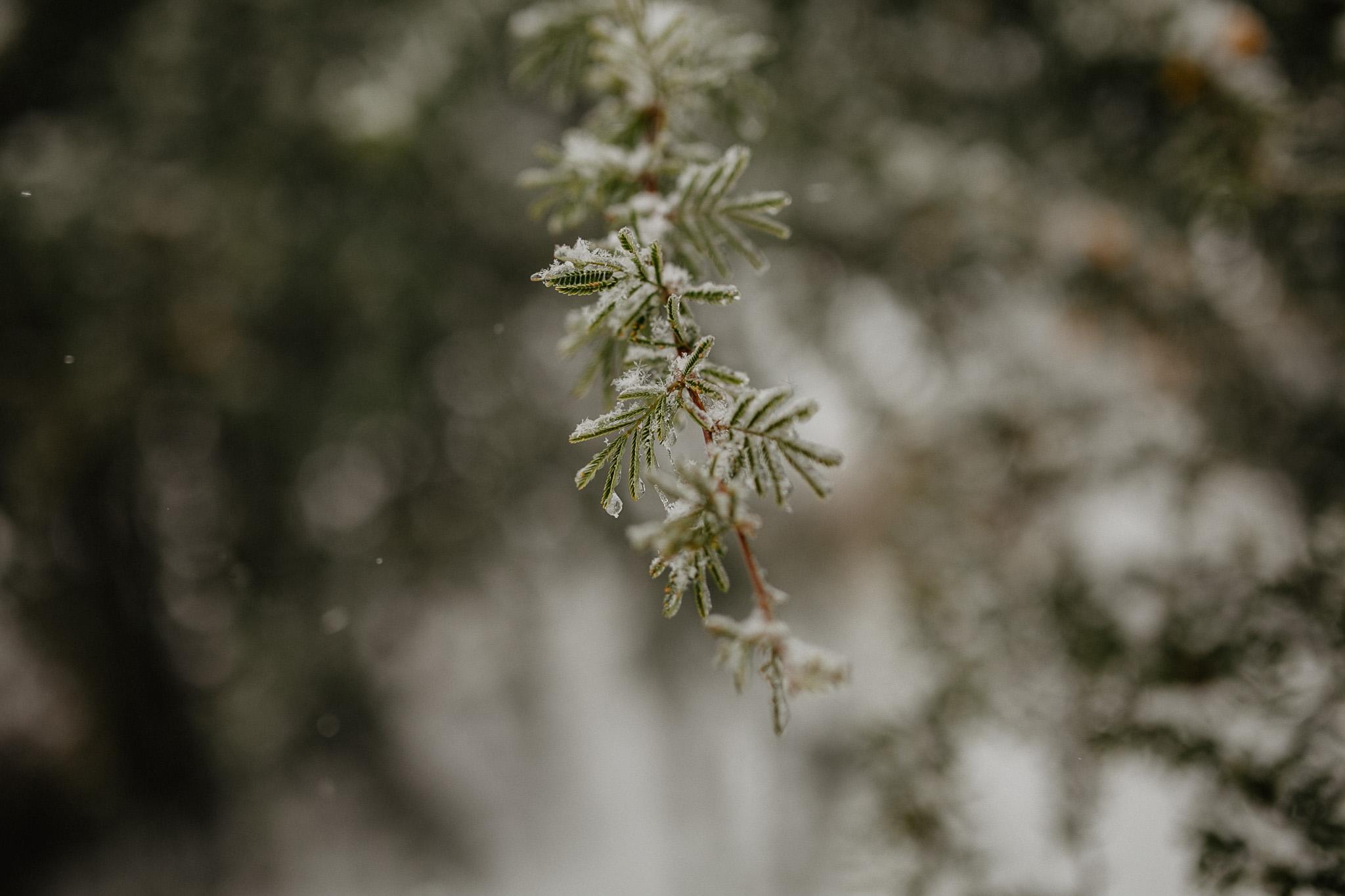 sesion-en-la-nieve-IMG_3377.jpg