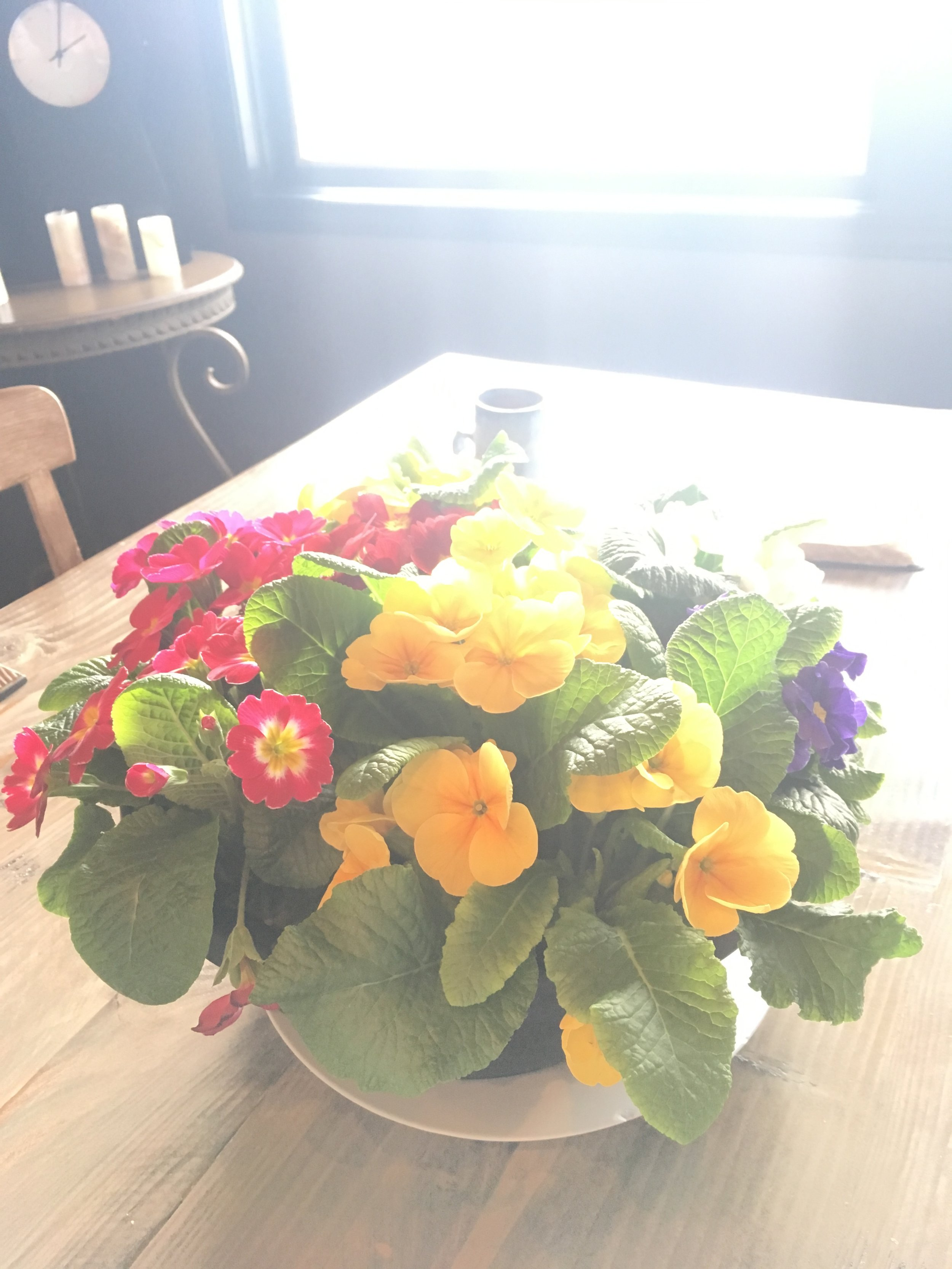Spring Flowers on table in sunlight