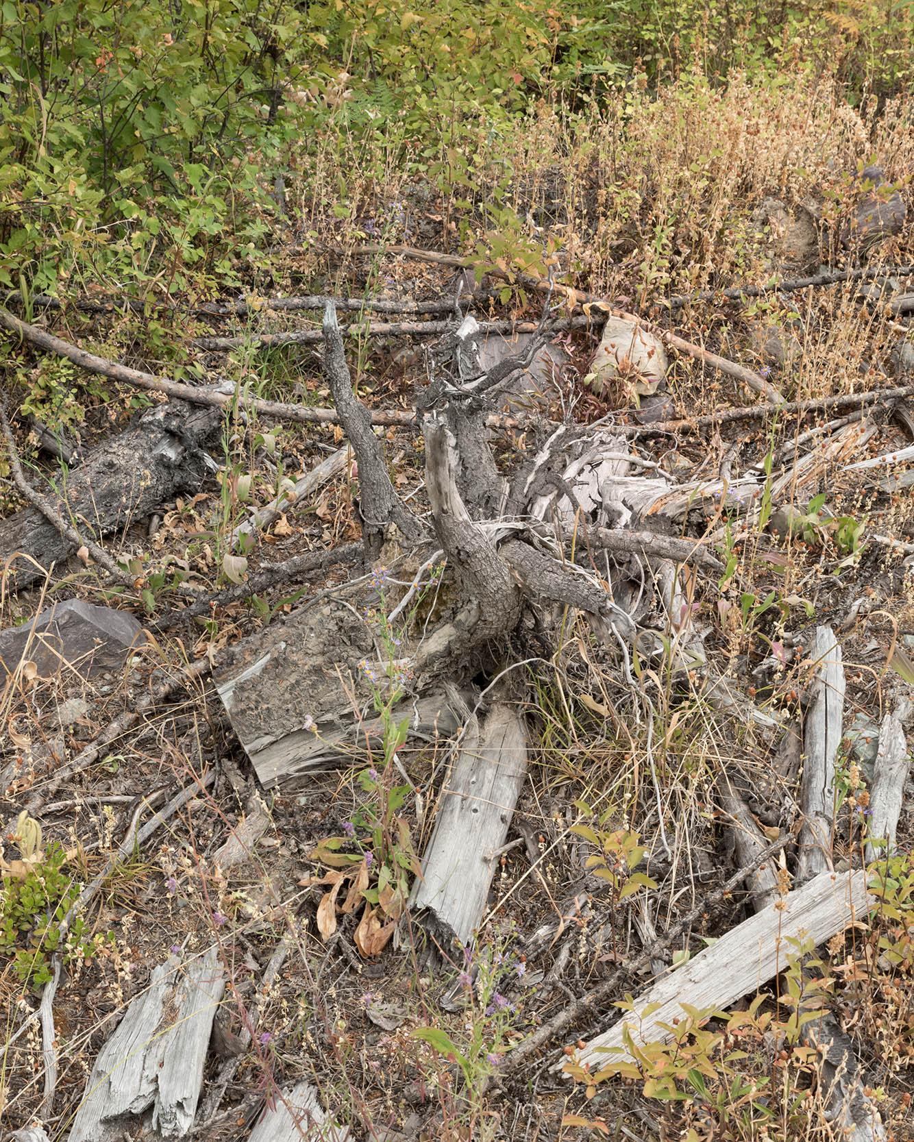 tree_on_hike.jpg