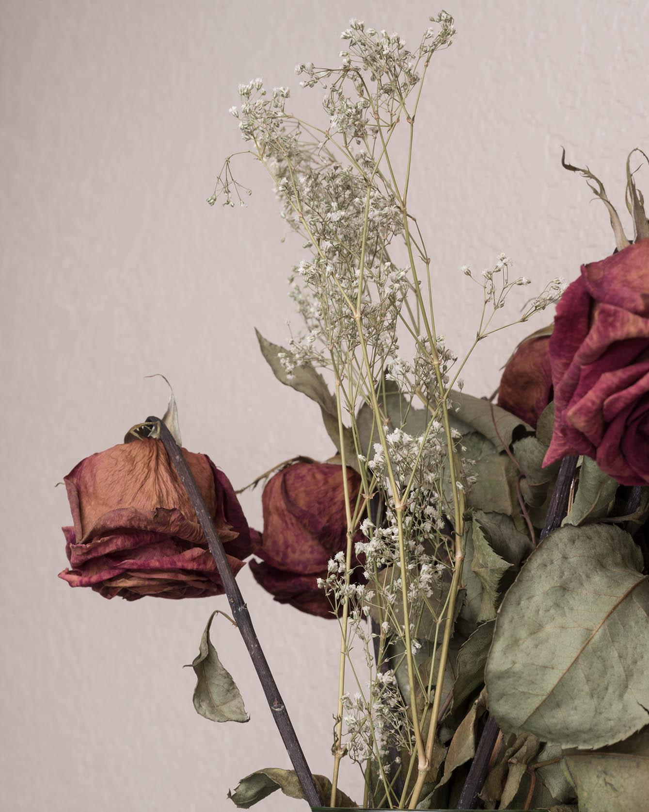 dead_roses_from_Cam.jpg