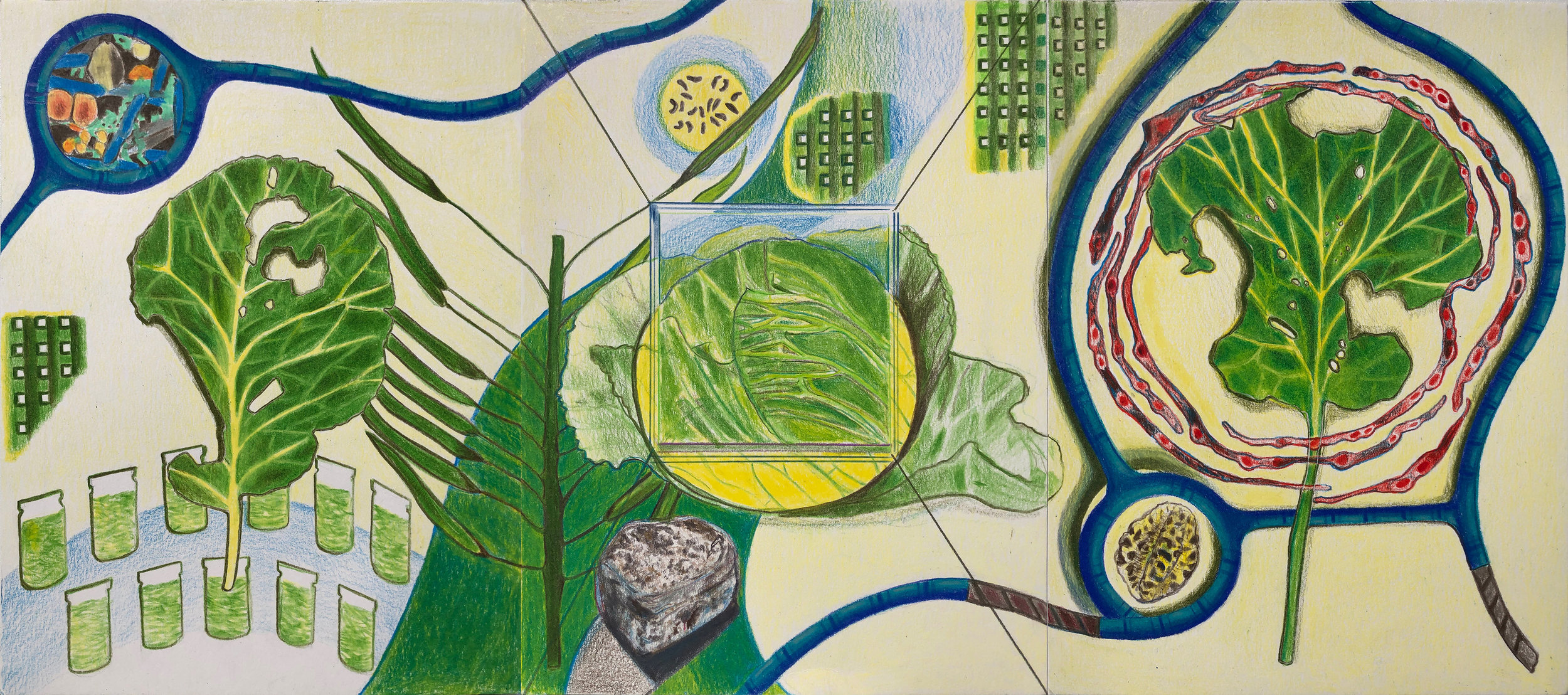 """Cabbage Looper Leaf Tracings , 2019-ongoing. colored pencil on paper, 9"""" x 12"""" each"""