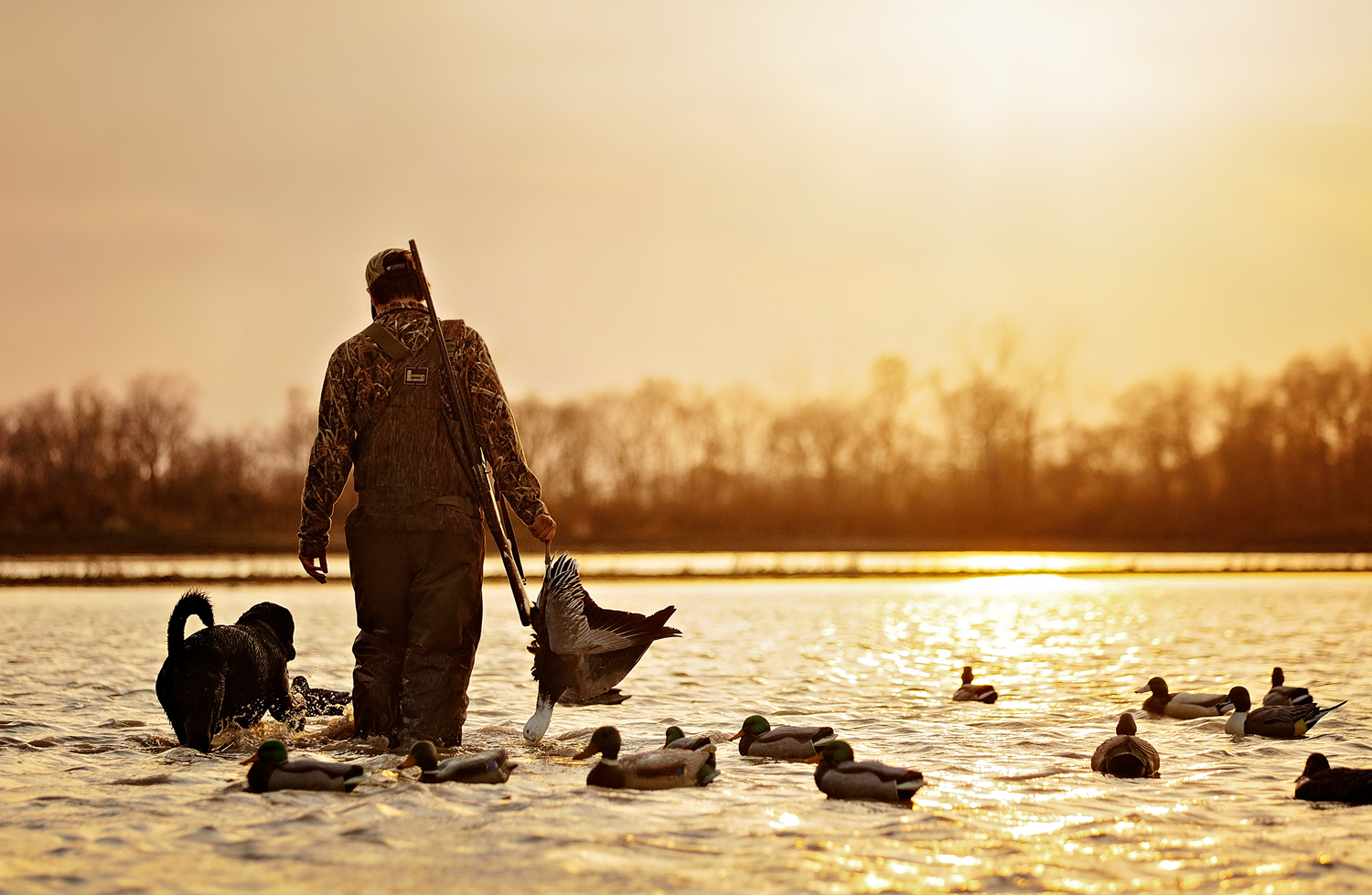 North Mississippi Duck Hunting Dog Photographer