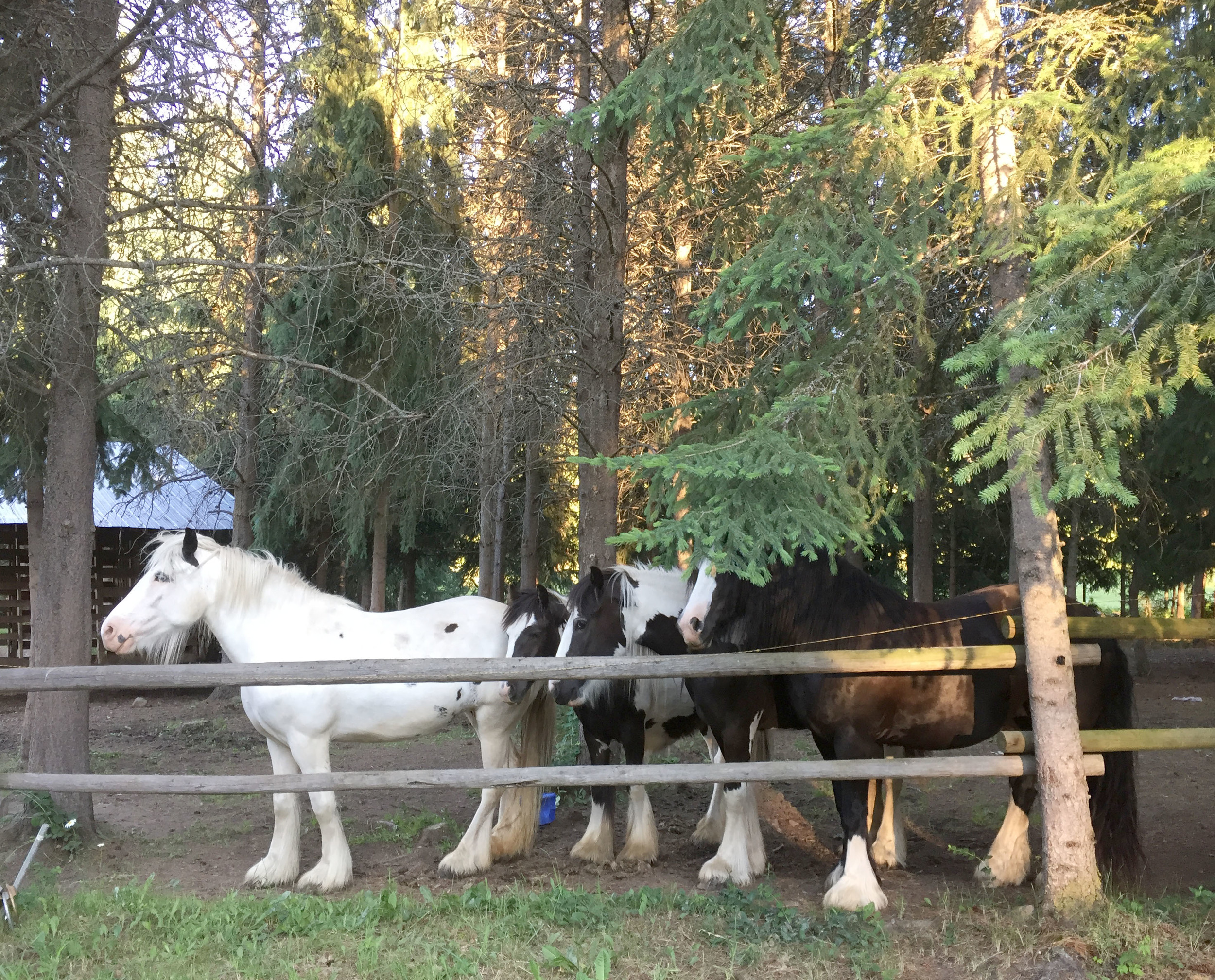 Hett Family Farm