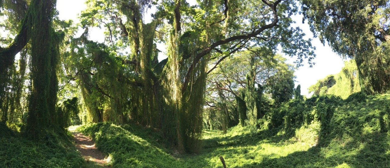 """Parque Almendares is also known as the """"lungs of the city"""" for Havana. A beautiful forest in the middle of the city filled with trees draped with vines that look like walls."""