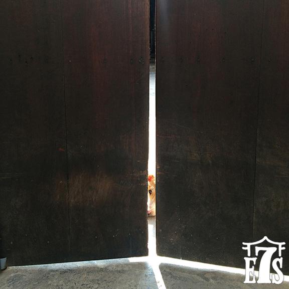 nancy10_Guard_Dog_Hoi_An.jpg