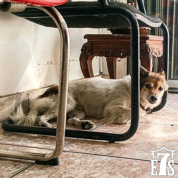 nancy11_Shop_Dog_Saigon.jpg