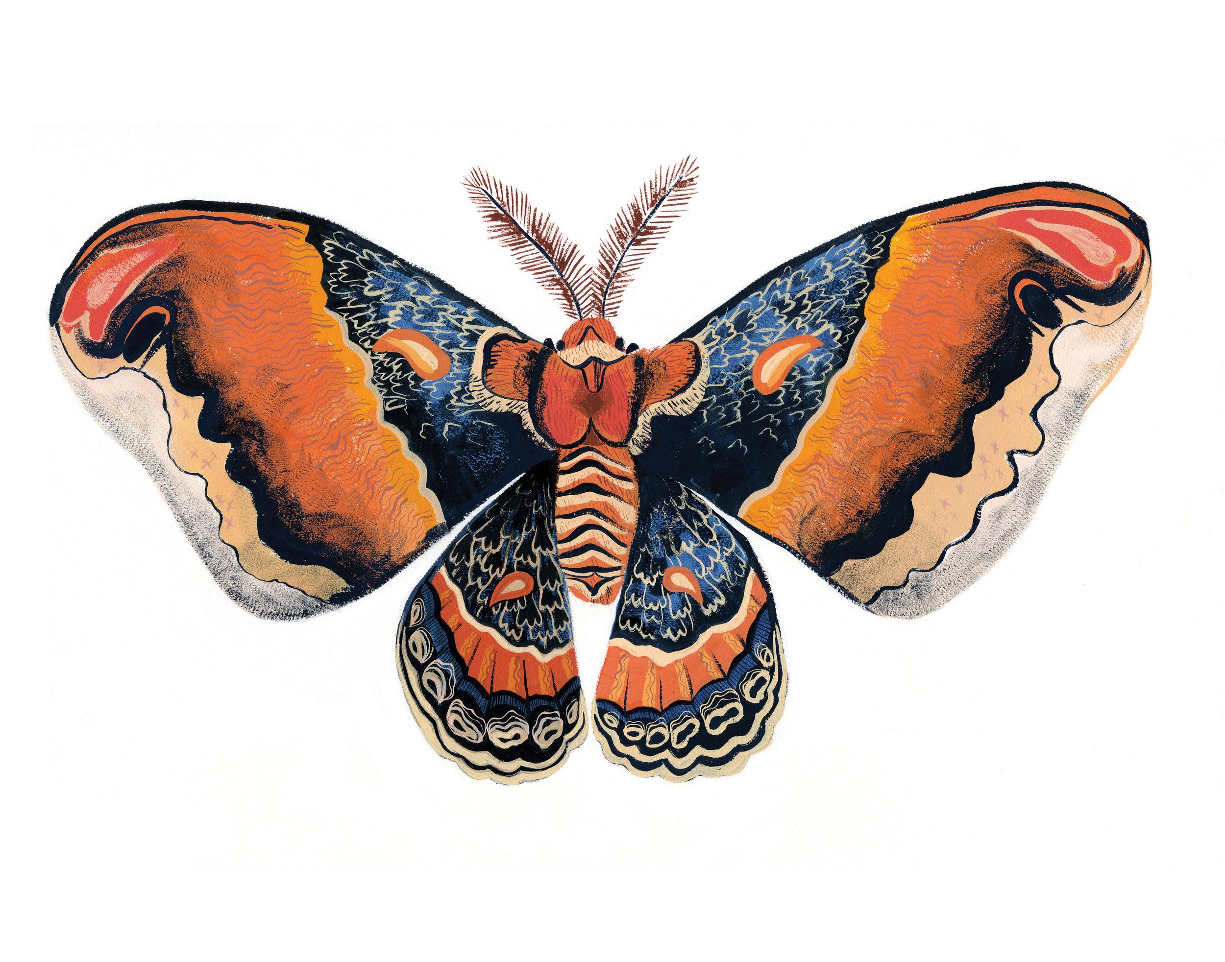 Moth 11x14.jpg