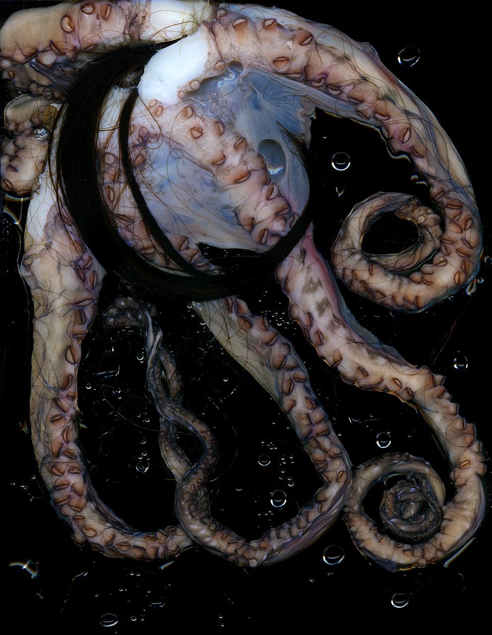 Hair Octopus.jpg