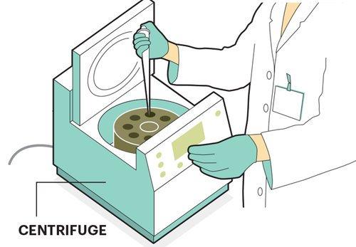 1140-cells-preparation.imgcache.revb7ae0841050a050.jpg