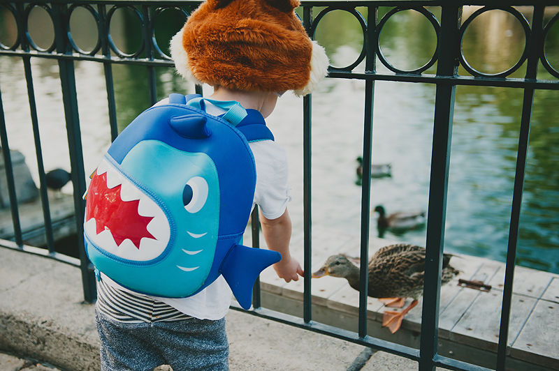 boy wearing chip hat and shark backpack feeding duck at disneyland