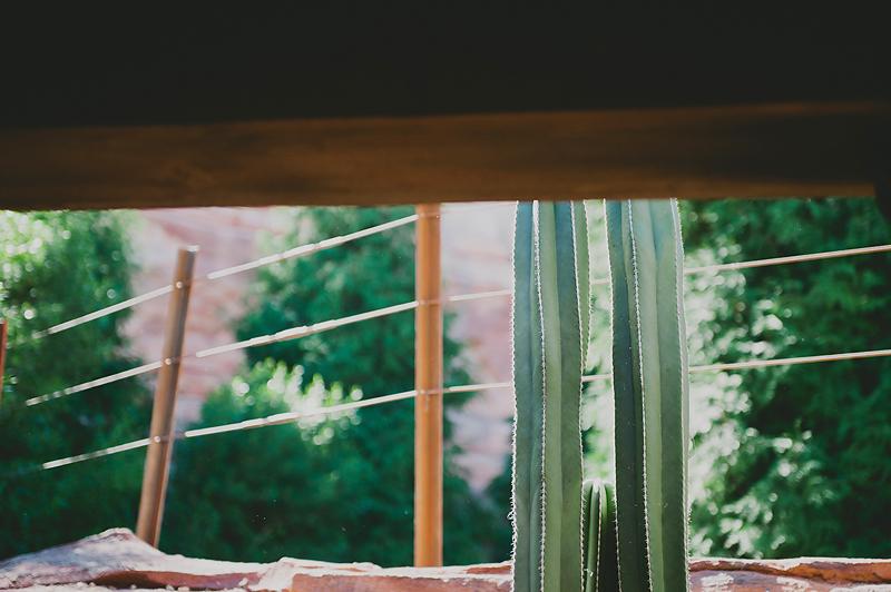 Cactus California Adventure Radiator Springs Racers