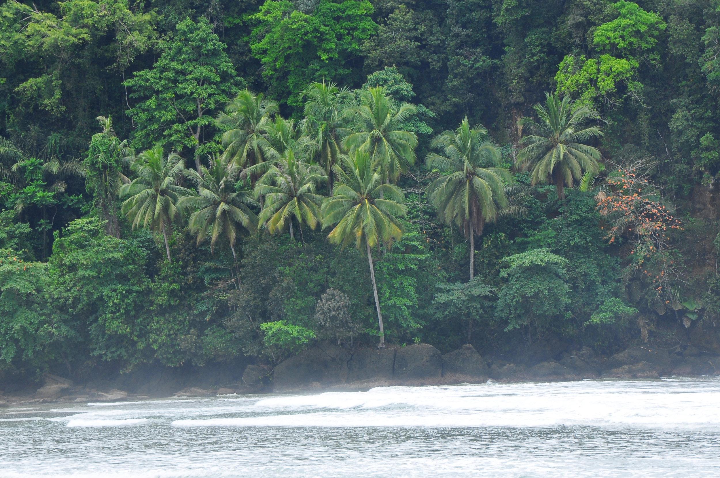 tropical-scene-indonesia.jpg