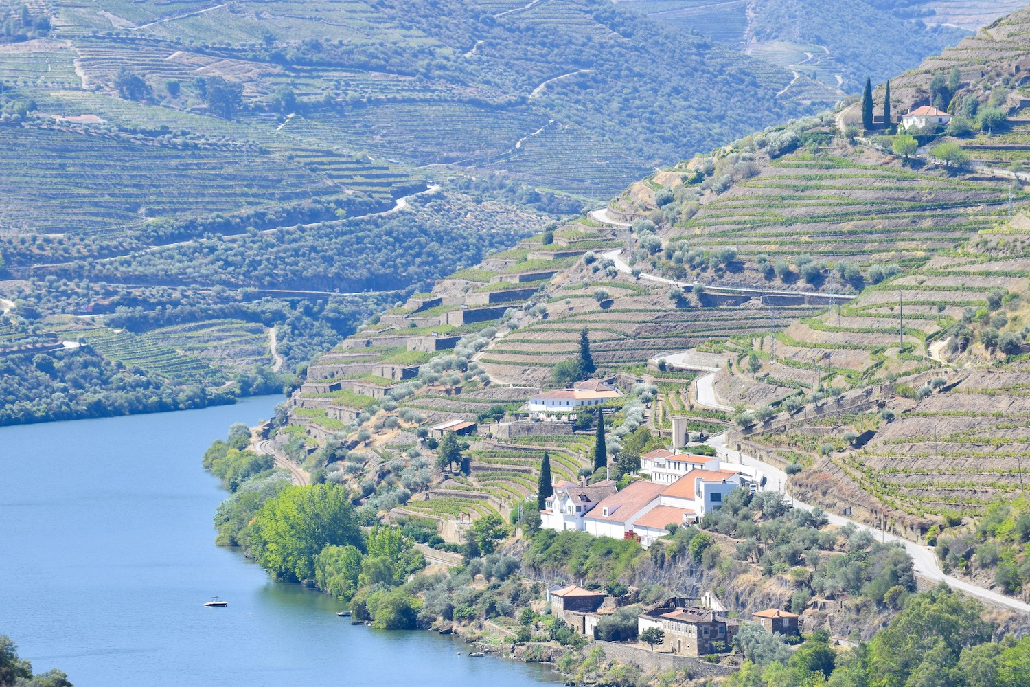 Vineyards-douro-valley.JPG