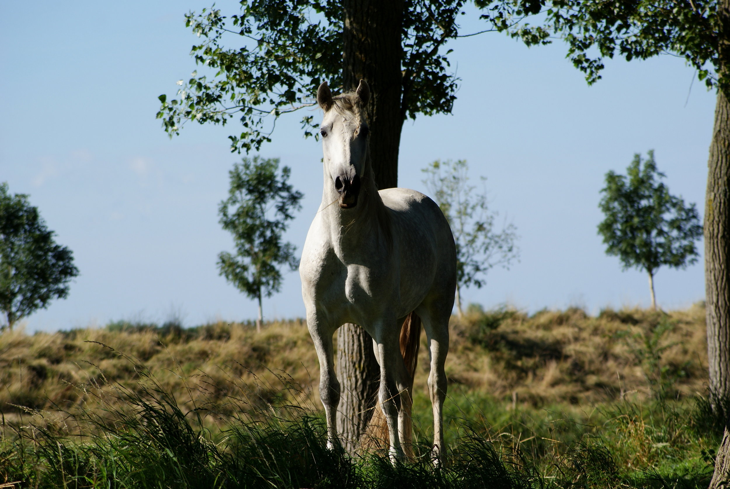 His horse - click on Aquila for more