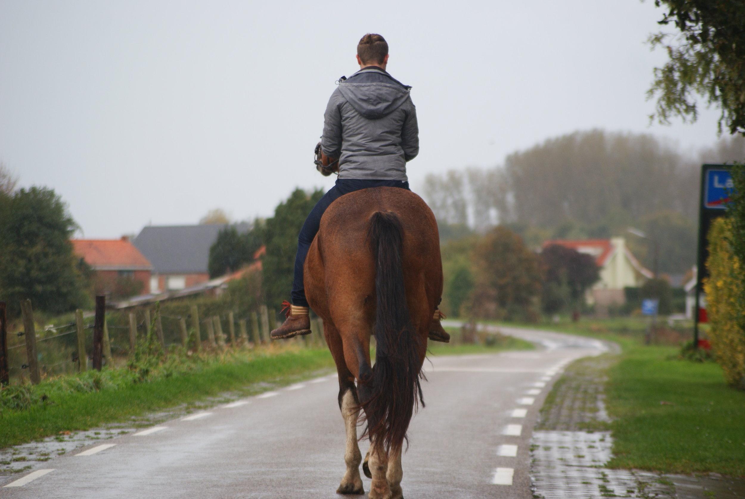 """""""Wauw."""" Dit lijkt me echt een geweldig paard!"""