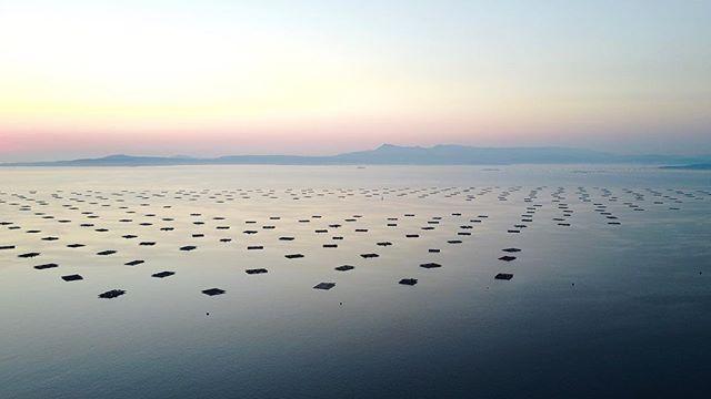 📷Bateas de mejillones 📷mussel cultivation . . .  #drone #elcuervoblanco #instadrone #dronestagram #dji #mavic #dronepic #dronephotography #landscape #landscapephotography #sea #oceano #atlantic #atlántico #art #outdoors #mussel #nature #photography #aerialphoto #sky #aerialphotography #coventry #ogrove #galicia #spain #españa #galiciacalidade