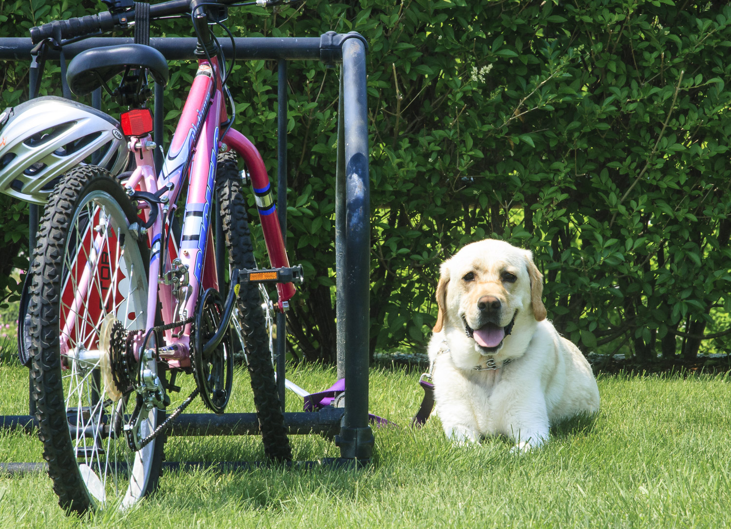 Bike Rack, Bike and Doggie, Outdoors