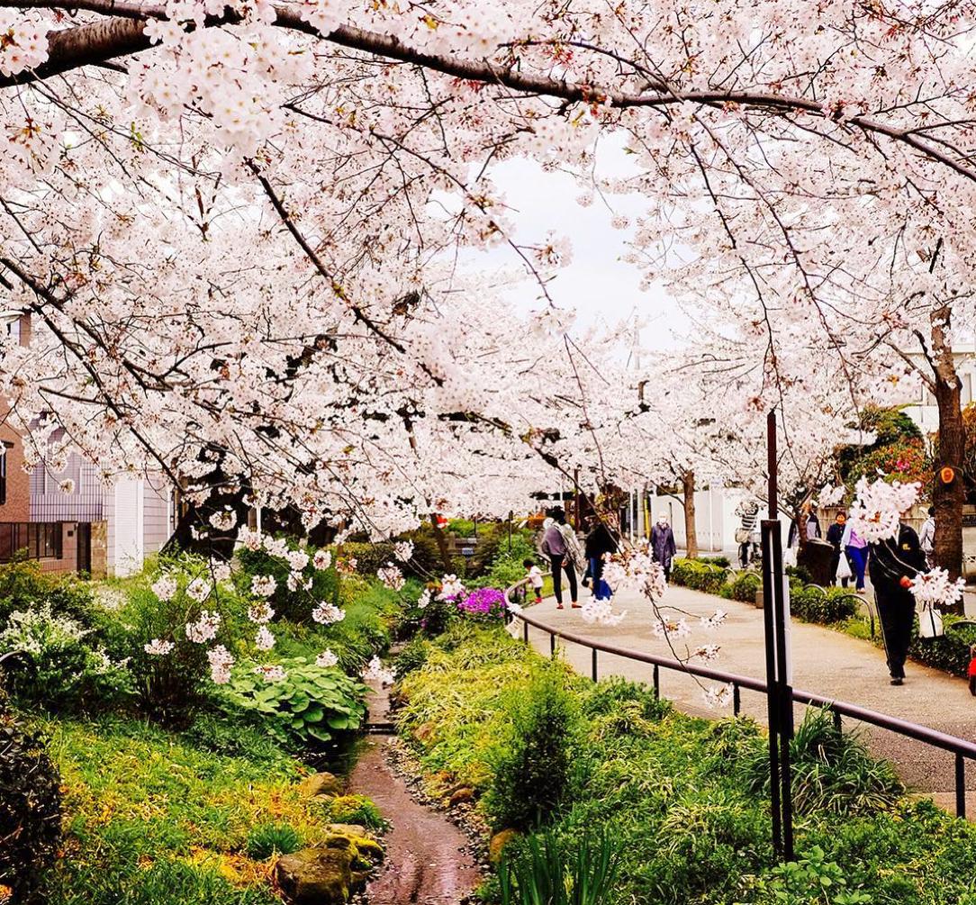 NatureWalkBlossoms